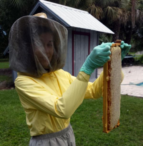 Honey Thievery!