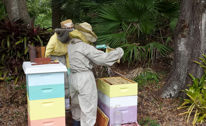 Adventures in Beekeeping!