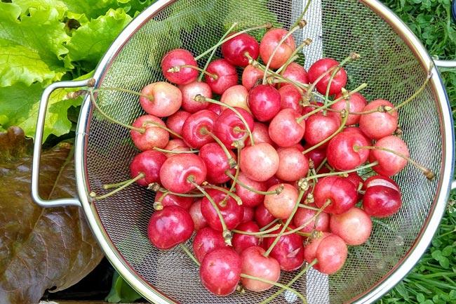 Edible Yardwork: Year 2