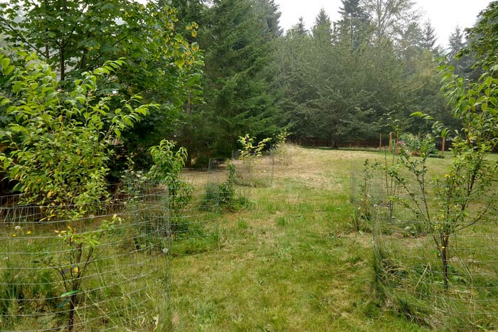 Edible Yardwork: The Starter Orchard