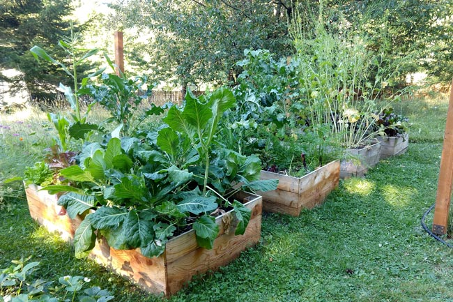 Edible Yardwork: Garden Beds, August